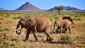 Elefanter i smukt Samburu landskab