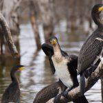 Fugle ved Lake Naivasha