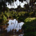Frodigt område, Samburu